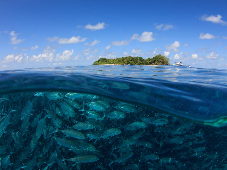 Isla de Sipadan - buceo Malasia